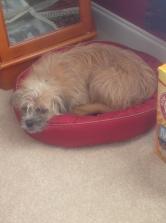 Ms. Sadie snoozing the day away!